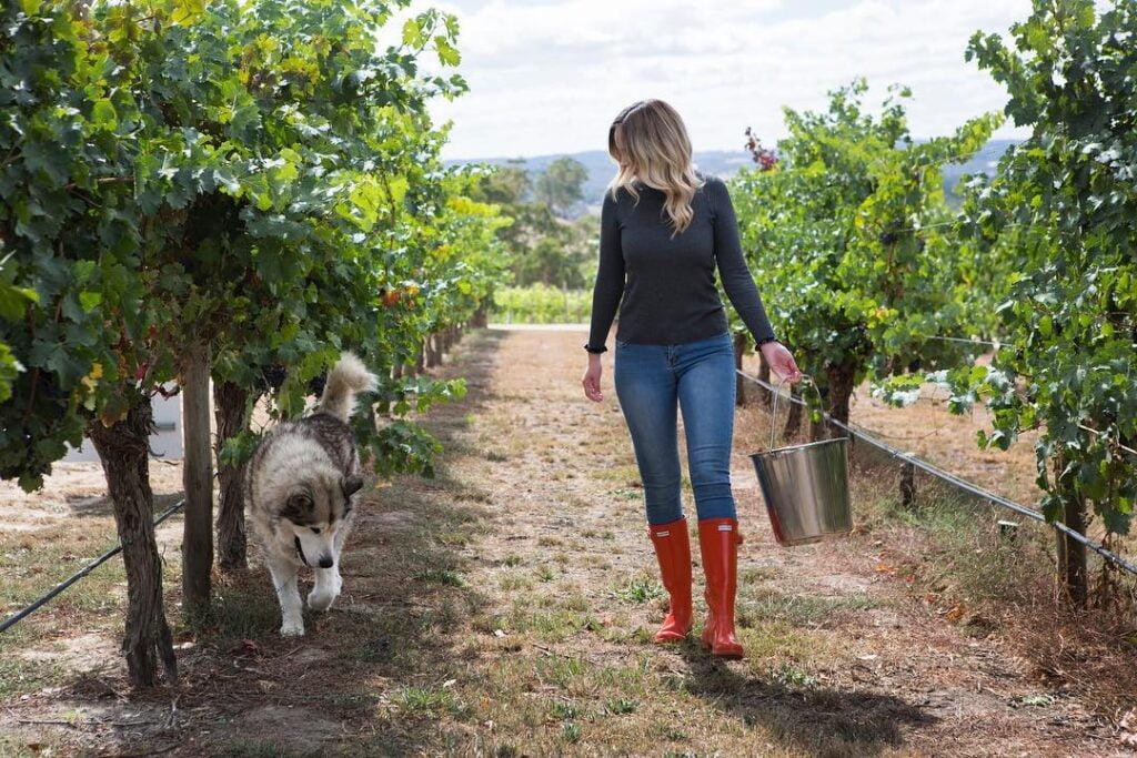 澳大利亚葡萄酒风土