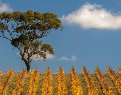 Jericho Adelaide Hills Fiano
