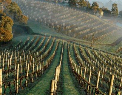 Coldstream Hills Tasmania Pinot Noir